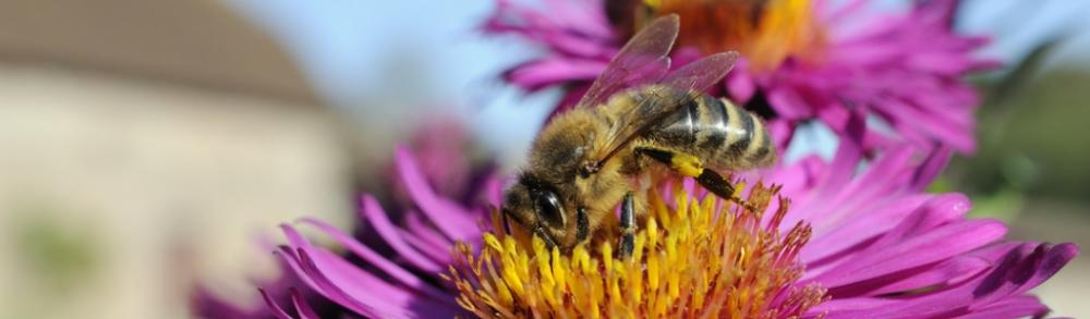 Focus on...Gardening for bees