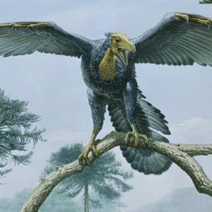 Archaeopteryx dinosaur exhibition at Shrewsbury Museum and Art Gallery