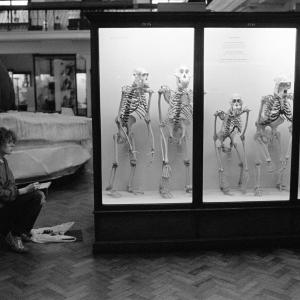 LON10446 The Natural History Galleries of the Horniman Museum in London, England. 1993. © Stuart Franklin/Magnum Photos